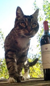 i can has wine?!